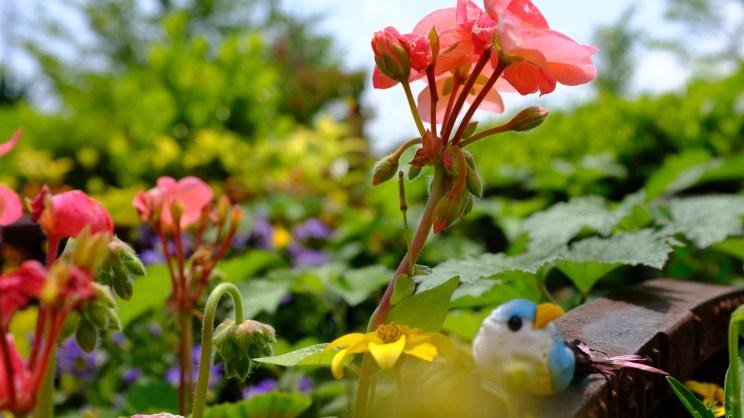 Kochi Japan Botaincal Gardens Tomitaro Makino travel (174)