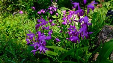 Kochi Japan Botaincal Gardens Tomitaro Makino travel (223)