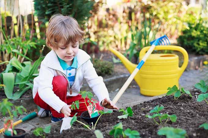 What Soil Buy Vegetable Garden