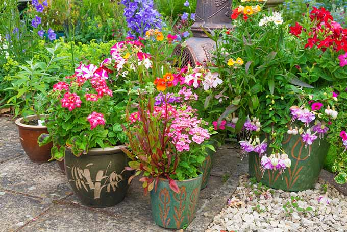 Pots of Container Flowers | GardenersPath.com