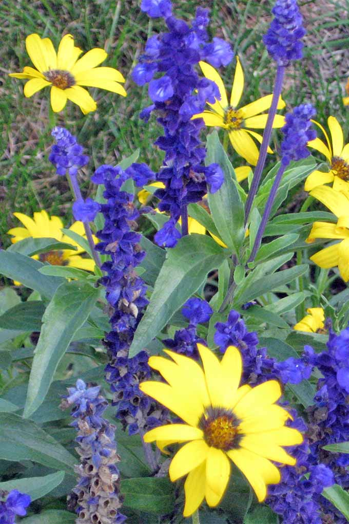 11 native blue flowers