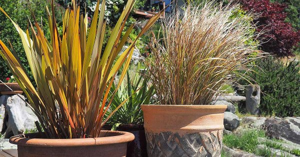 easy landscaping with ornamental