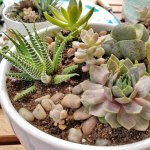 9 Best Succulent Planters For Container Gardening 2020 Gardener S Path