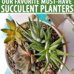 9 Best Succulent Planters For Container Gardening 2020 Gardener S Path