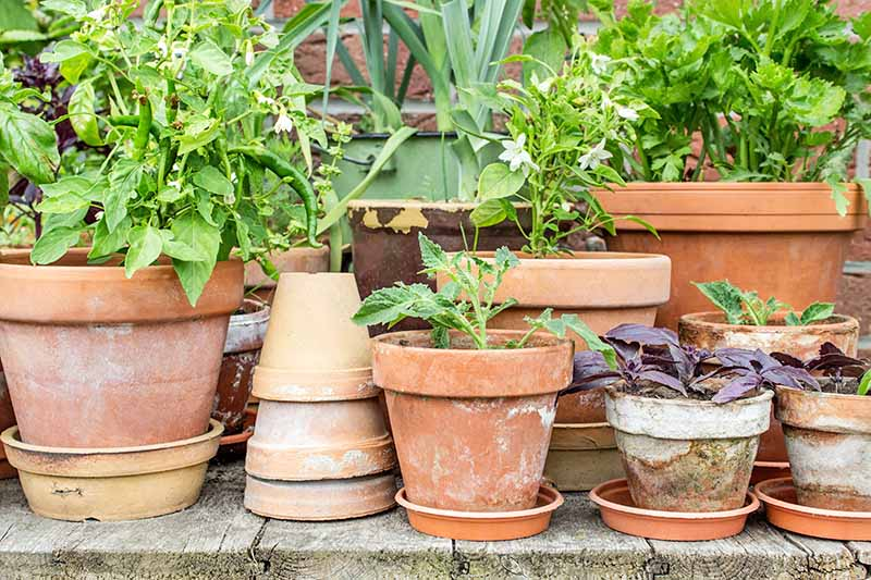 The Best 11 Vegetables To Grow In Pots And Containers Gardener S Path