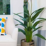23 Colorful Houseplants To Warm Up Your Winter Gardener S Path