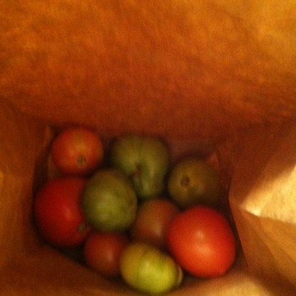 green tomatoes ripening in paper bags