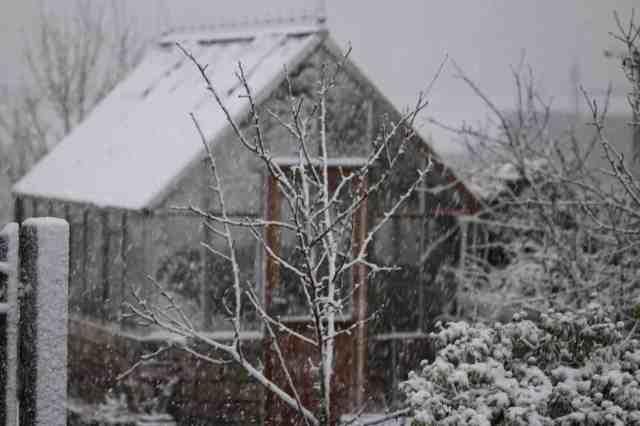 winter gardening scaled