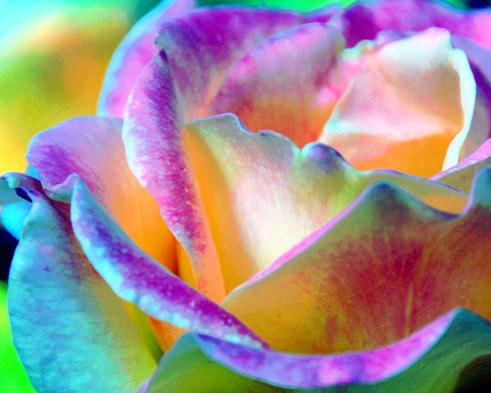 Artful Colorful Rose Digital Art Print by Lorrie Morrison