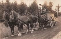 Shattuck Dairy - narrow freight wagon, 4 horses