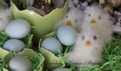 Fluffy Chicks