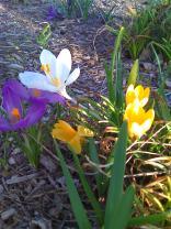 photos taken by gardenia c hung 015