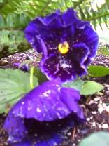 photos taken by gardenia c hung 071