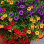 40 Beautiful Container Flower Garden Ideas (39)