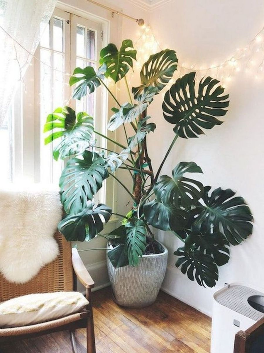 40 Awesome Indoor Garden Design Ideas That Look Beautiful (2)