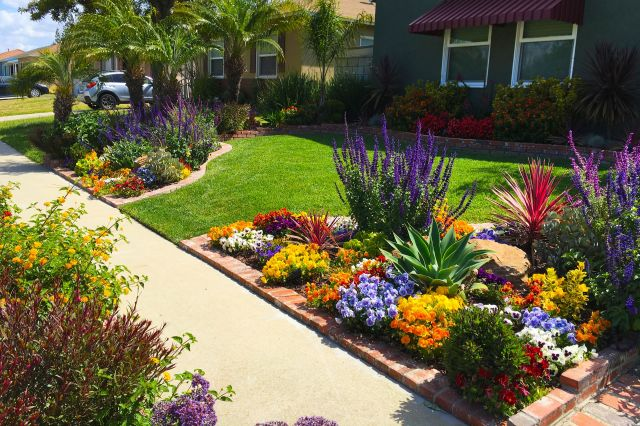 Awesome landscaping front yard
