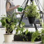 Beautiful Plant Nursery Business Ideas