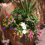 Awesome Container Plants For Full Sun Ideas