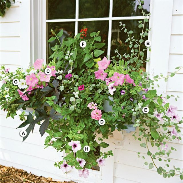 Amazing container plants for full sun ideas