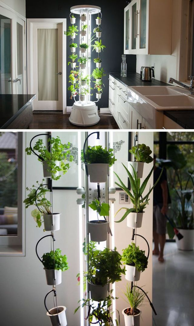 Awesome Indoor Vegetable Garden Ideas
