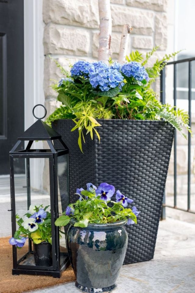 Wonderful outdoor plants in pots ideas