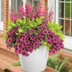 Cool Container Plants For Full Sun Ideas