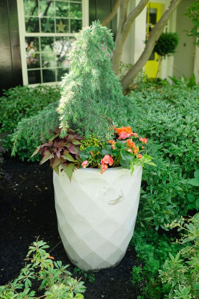 Fantastic outdoor plants in pots ideas