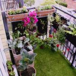Fantastic Balcony Plant Ideas