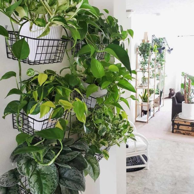 Wonderful indoor plant wall ideas
