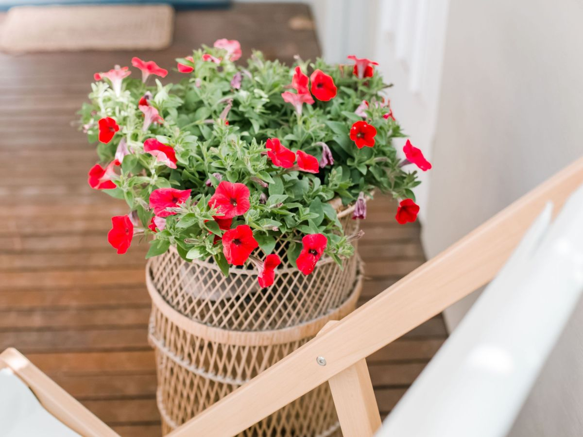 Gorgeous  container plants for full sun ideas