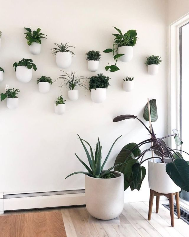 Fantastic indoor plant wall ideas