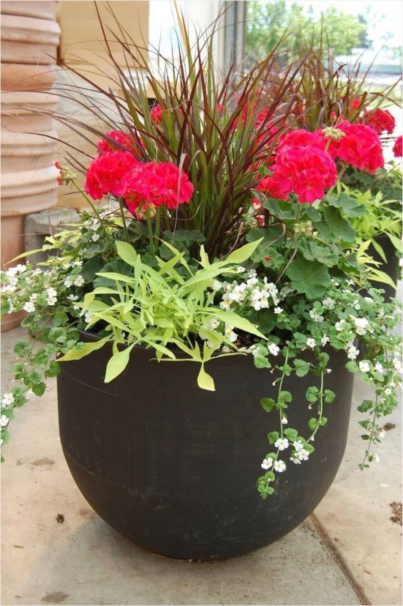 Adorable outdoor plants in pots ideas