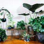 Wonderful  indoor potted plant arrangement ideas