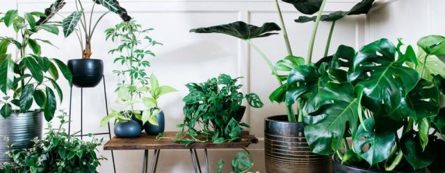 Wonderful  indoor potted plant arrangement ideas