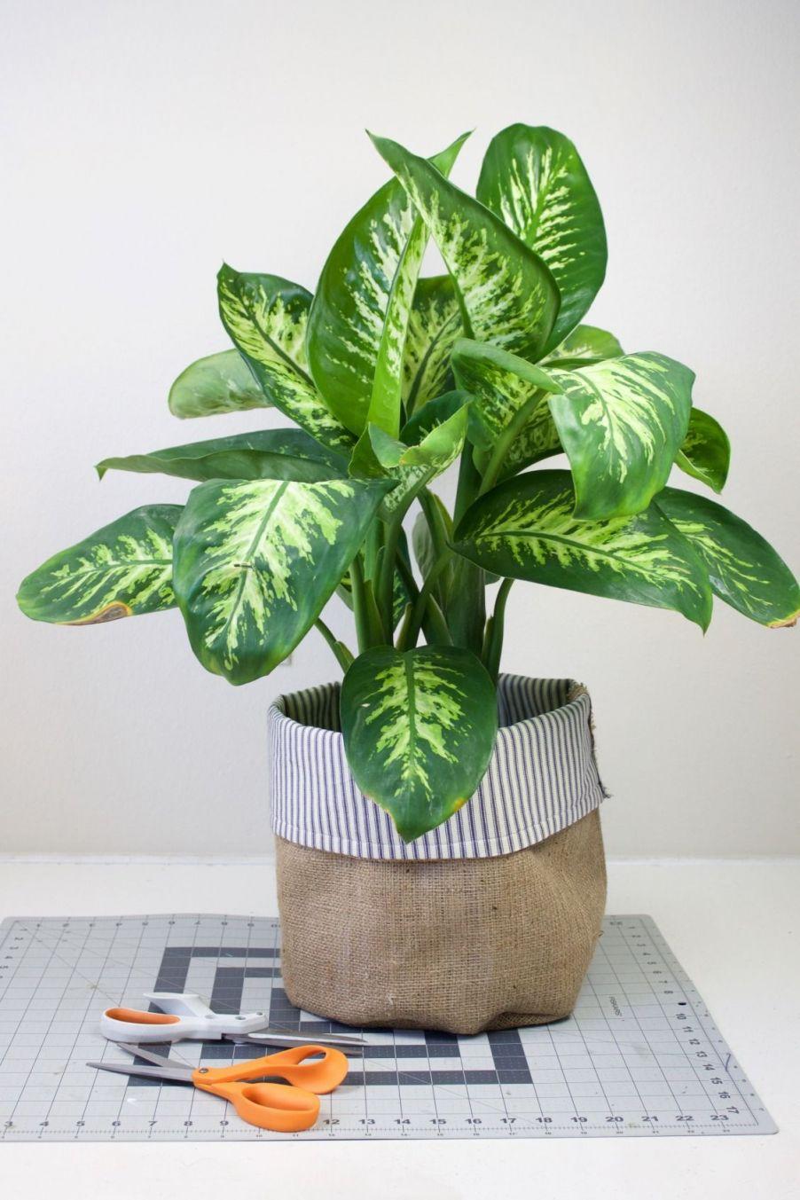 Beautiful Indoor Plant Pot Decoration Ideas
