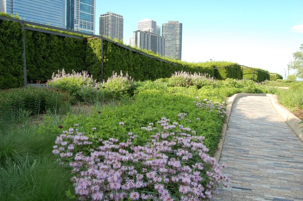 Chicago Lurie Garden Gardeninacity