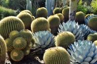 Greetings from the Huntingtons Desert Garden  gardeninacity