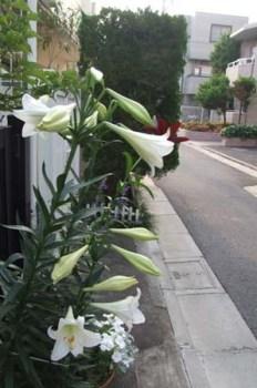 gardening-genkan (3)