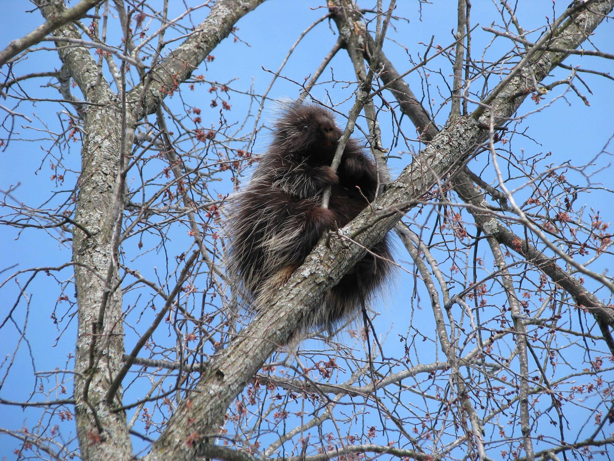 Animal Damage To Trees