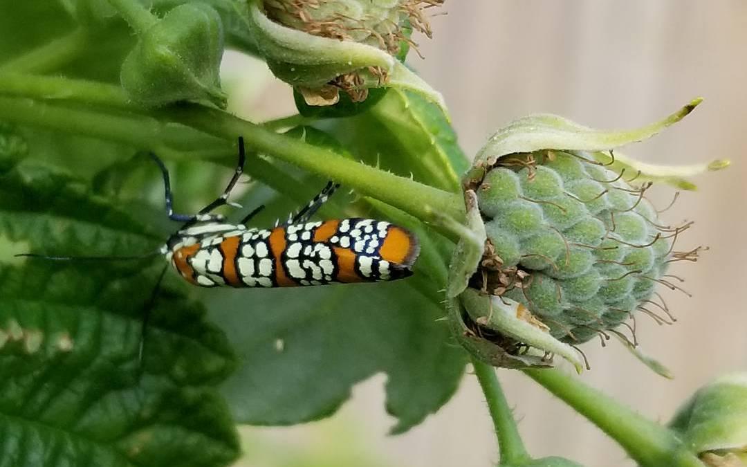 bug on berries