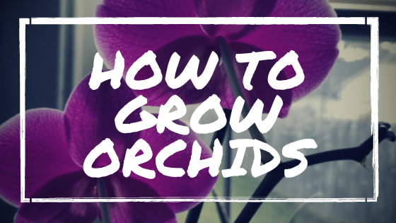 How to Grow Orchids