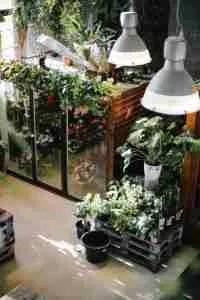 Grow-indoor-garden