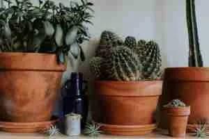 Making an Indoor Garden