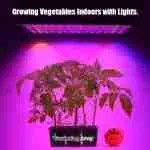 Growing Vegetables with Light
