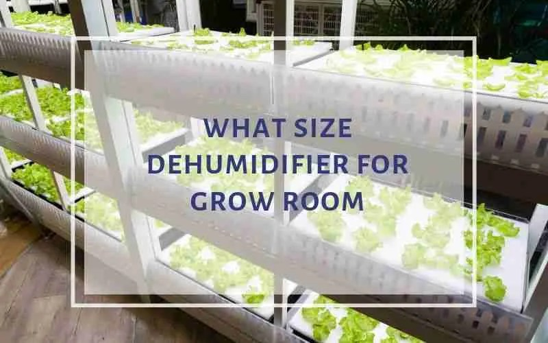grow room dehumidifier size