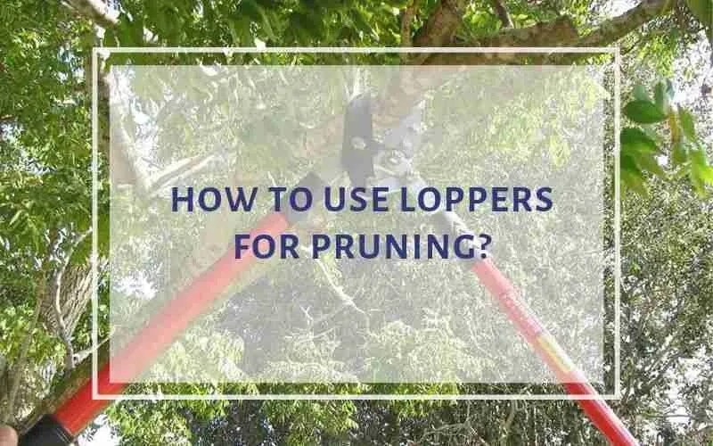 how to use garden loppers