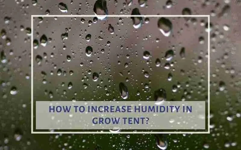 how to increase humidity
