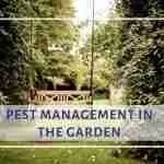 Pest Management in the Garden