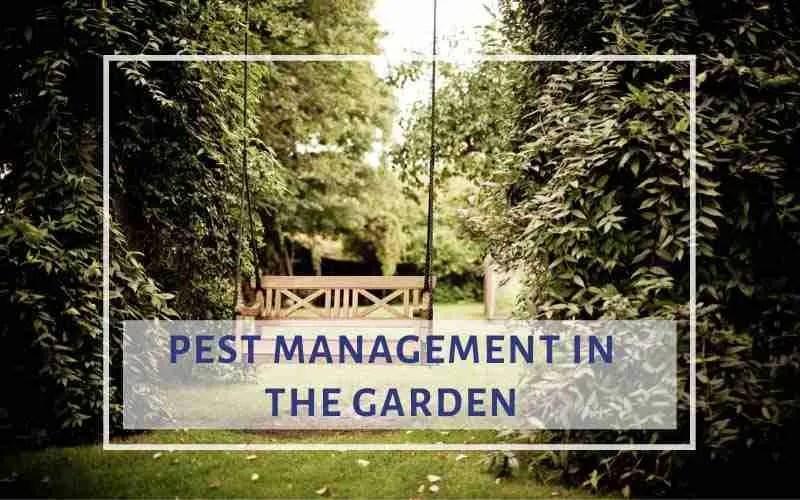 Pest Management in the Garden
