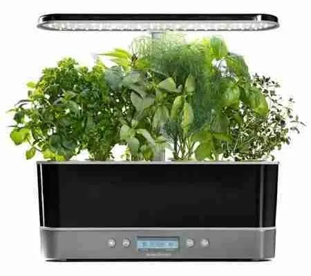 cleaning aerogarden